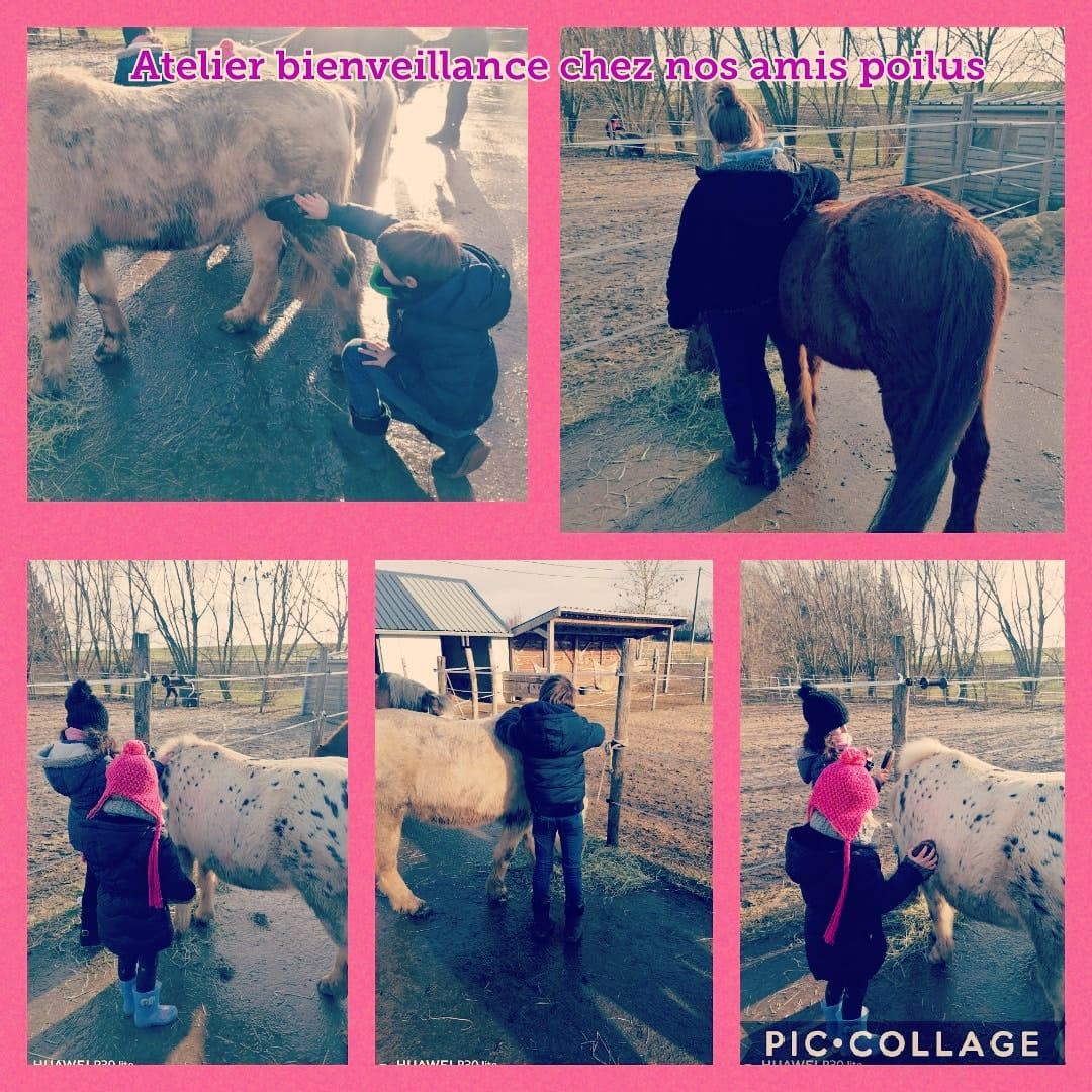 développement personnel enfants - poneys